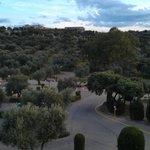 Вид из номера на оливковую рощу.