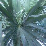 Palms blocked pool view.