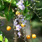 Park Athen 8 Blüten und Früchte