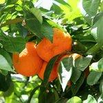 Park Athen 3 Früchte
