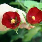 Park Athen 4 Blüten