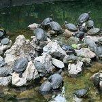 Park Athen 5 Schildkröten