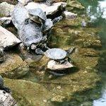 Park Athen 1 Schildkröten