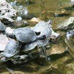 Park Athen 6 Schildkröten