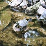 Park Athen Schildkröten
