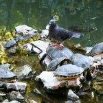 Park Athen 10 Taube auf Schildkröte