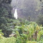 One of the falls on short hike to Akaka Falls.