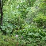 夏の青柳家の庭