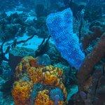 plongée à proximité (cabrit diving center)