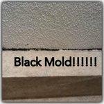 The black mold on the bathroom ceiling