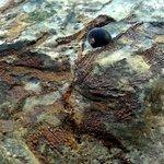 Gondwana Coast Fossil Walk