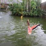 Flamingos were so fun to watch