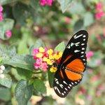 Beautiful and plentiful butterflies