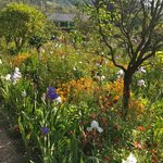 Monet's beautiful gardens in Giverny, France