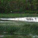 Если присмотреться - видно летающих рыб над водопадом, они сверкают на солнце
