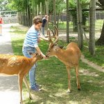 You can feed and pet the deer just like that!