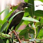 Bird in the gardens