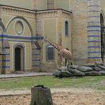 Richiami all'architettura africana per le giraffe