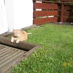 relax del gatto Fausto