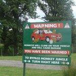 Attention aux singes