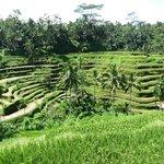 Вид на рисовые террасы