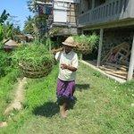 Старичок-сборщик риса