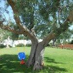 Masseria Bianca di Puglia Foto