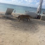 One of the muts that live on the beach