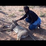 Friends with a cheetah