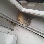 moisissures dans fenêtre
