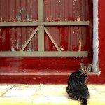 Cat front of door