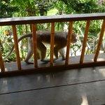 Monkeys in the balcony