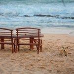Можно сесть и на территории пляжа только часов да 21.00 очень ветренно