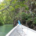 Mangrove tour !! Superbe
