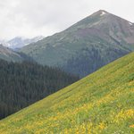 Crested Butte in July is magnificent!