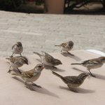 Friendly sparrows- they like bread