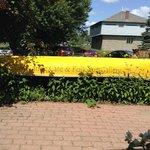 Yellow Canoe Cafe