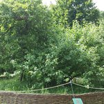 The legendary apple tree under which Isaac Newton sat...