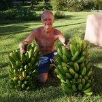 Scott's Bananas - garden produce