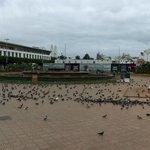 Pigeons on Mohammed V Square