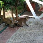 naughty , feeding the wildlife