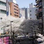 Sakura behind hotel