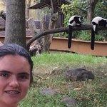 Juli y los lemures