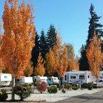 Autumn at Maple Grove