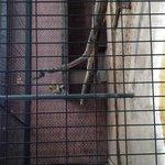 Very small cat enclosure :(