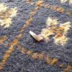 Toenails on carpet. Clearly not hoovered....