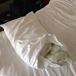 Inside my husband's pillow! Disgusting!