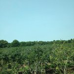 Acres and acres of delicious blue berries! Fun, family friendly activity!