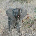 stoer olifantje