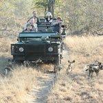 Jeep omringd door nieuwsgierige jonge wilde honden